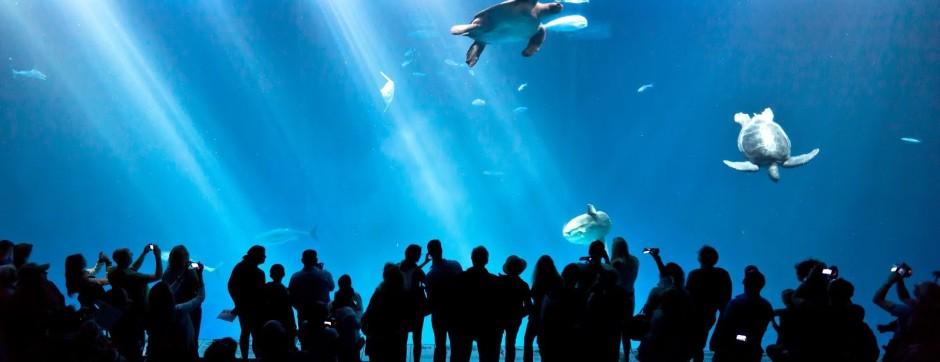 Aquário de Monterey, Califórnia, EUA